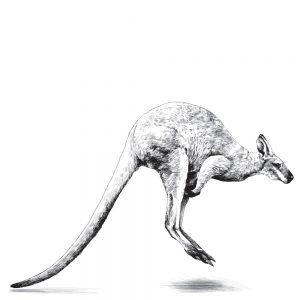 Slip kangourou
