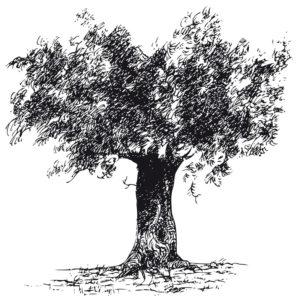 Fig. D. Olivier de Provence.