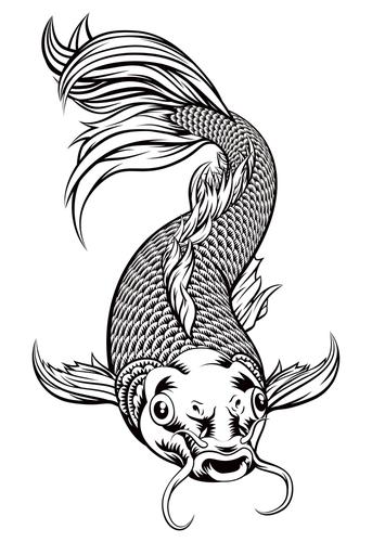 Fig. H. Carpe koï avec des yeux de merlan frit.